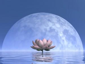 Mondaufgang Vollmond mit Lotus-Blüte