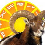 Widder 2017 mit Sonnen-Logo