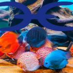 Fische 2018 Bild