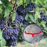 Oktober Vollmond 2019 mit Widder Mond
