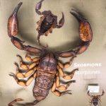 Skorpion 2019 - Ein Skorpion im Düsseldorfer Aquazoo (Aufnahme privat)