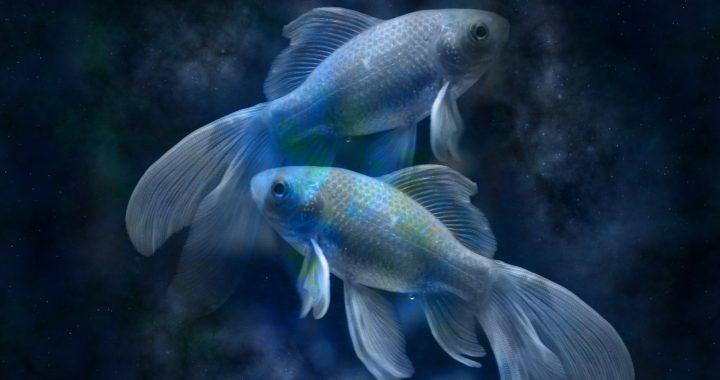 Fische 2020 Bild - Gerd Altmann Pixabay