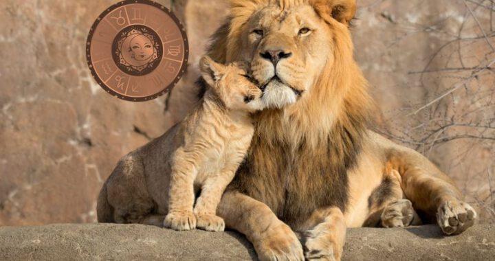 Löwe Neumond 2020 Bild